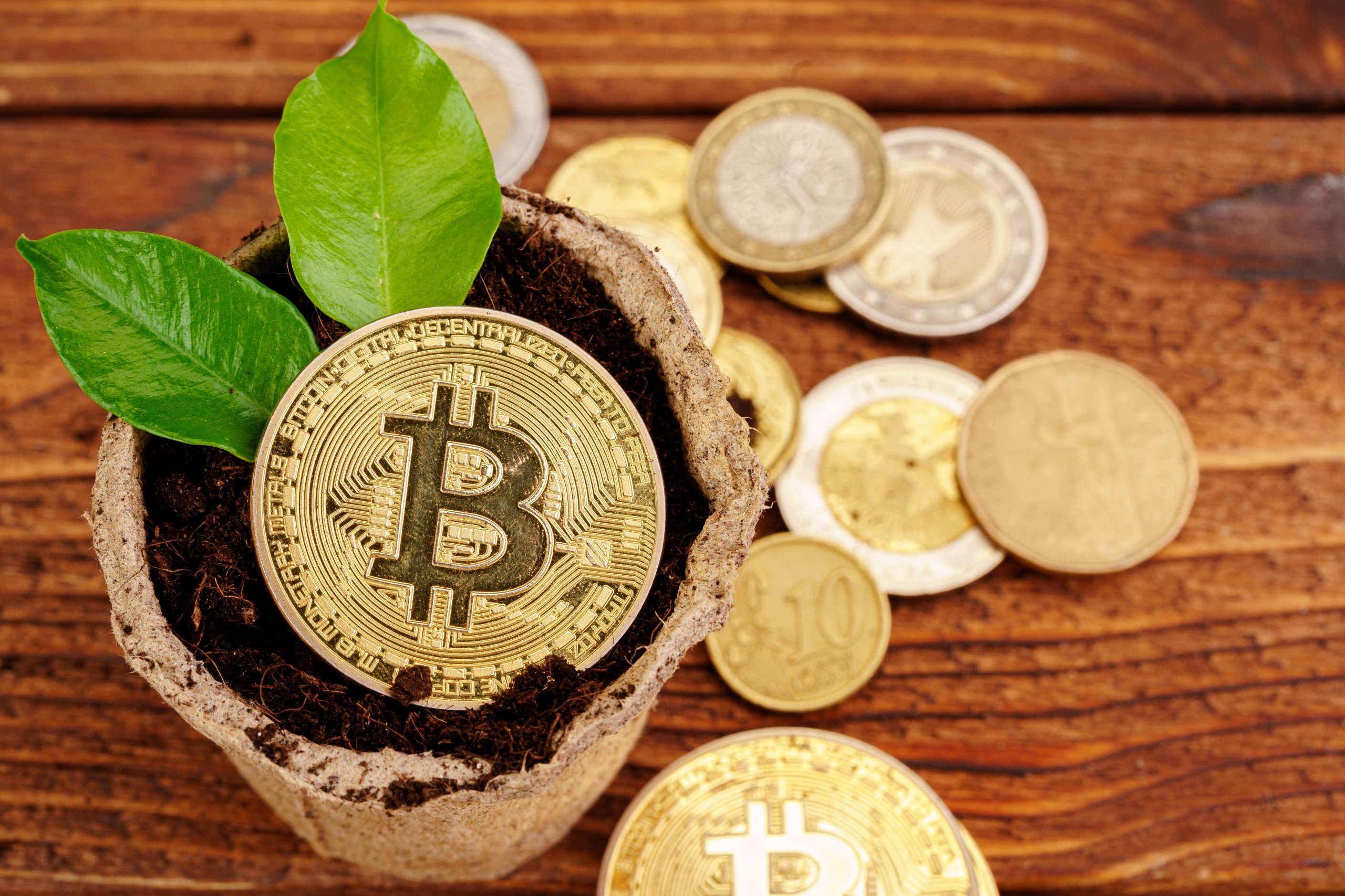 Golden bitcoin and green plant in soil